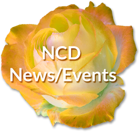 NCD News & Events