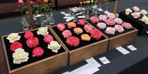 American rose boxes are displayed for judging at the 2019 North Central District Rose Show