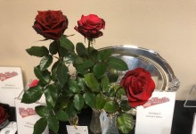 Wilcox Challenge Class  2019 NCD Rose Show, Diane Sommers 3 red hybrid teas Mr. Caleb, Hot Prince & Black Magic