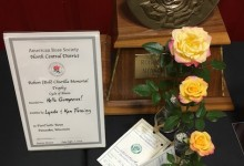 Robert Churilla Challenge Class 2019 NCD Rose Show, Lynda & Ken Fleming 3 stages of bloom, Hello Gorgeous!